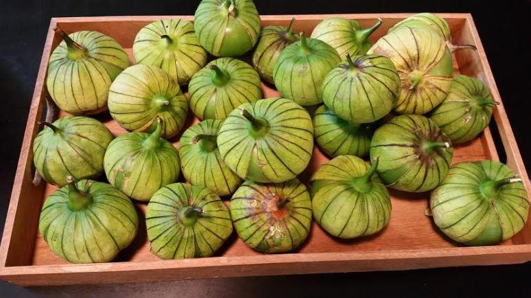 Gulliver Tomatillos from Restorah Farm